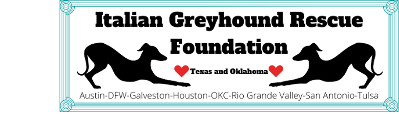 Italian Greyhound Rescue Foundation of Texas and Okalahoma
